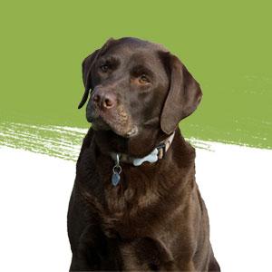 curso practico adiestramiento canino