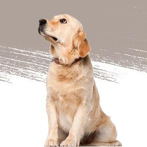 curso de especializacion en comportamiento canino