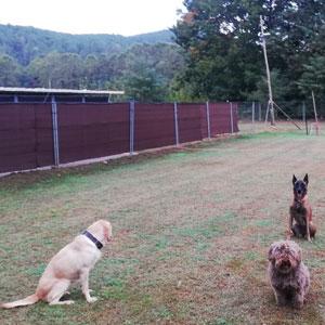 residencia canina caniescola la selva