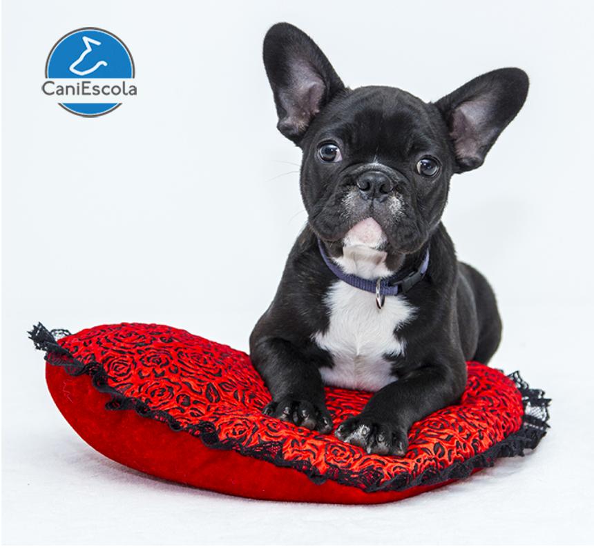 regalos utiles-tu-perro-san-valentin