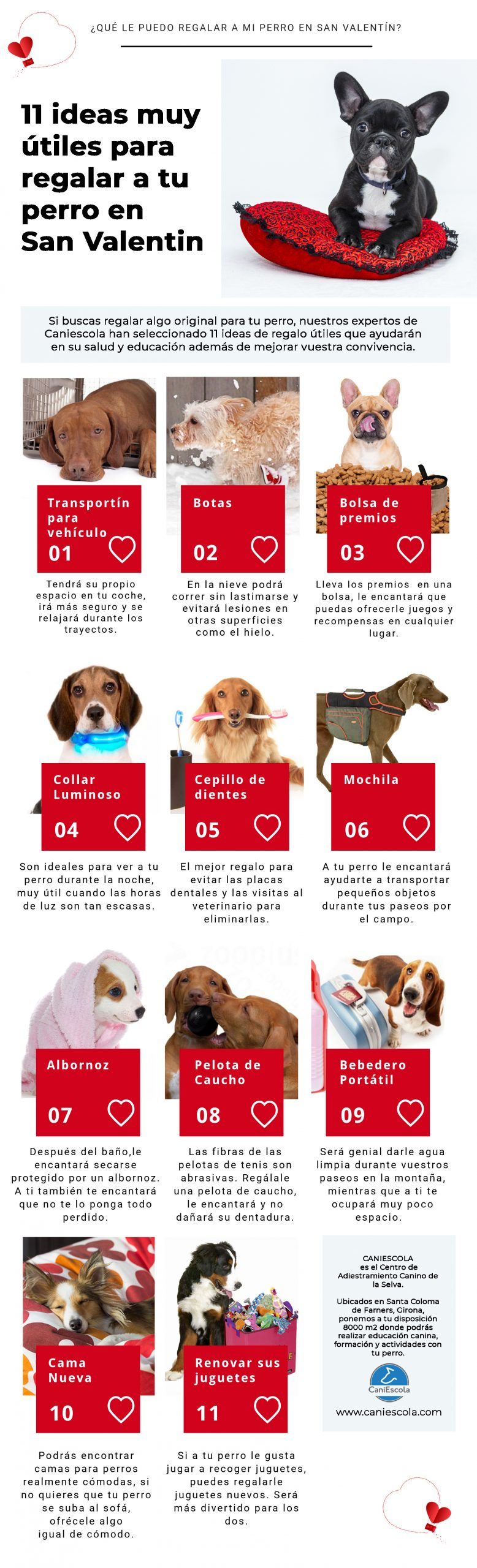 regalos-utiles-perros-san-valentin-caniescola